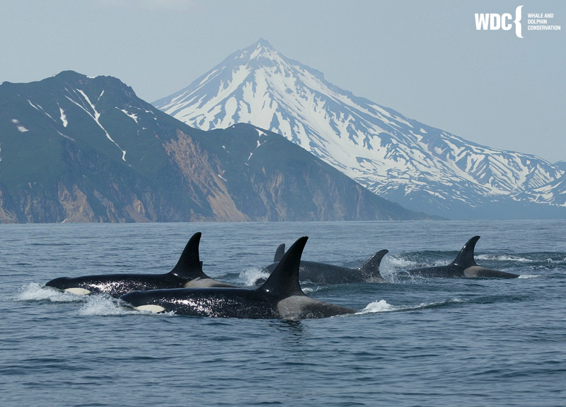 Whale and Dolphin Conservation works 25% faster with Asana
