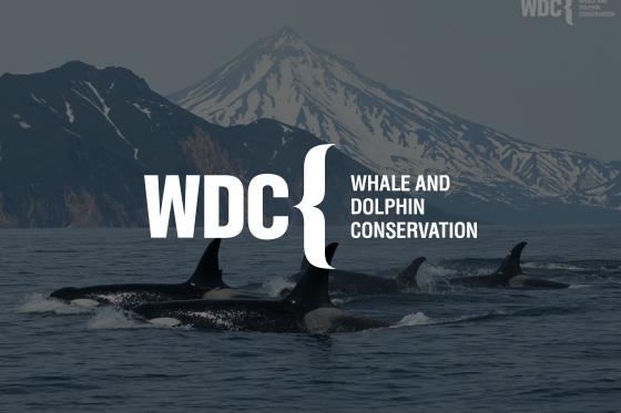 Whale and Dolphin Conservation arbeitet mithilfe von Asana um 25% schneller